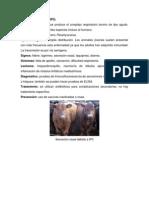 Parainfluenza Tipo 3 (Bovinos)