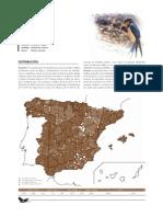 golondrina_comun.pdf