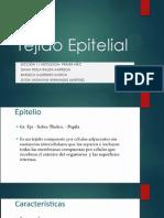 Tejido Epitelial Presentacion