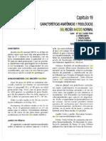 Características Anatómicas y Fisiológicas Del R.N. Normal