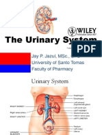 ANATOMY OF THE EXCRETORY SYSTEM.pptx