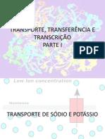 Transporte, Transferencia e Transcriçao Parte I