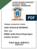 Aguilucho Comun