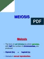 meiosis-sed619 1