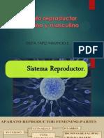 FISIOLOGIA Y ANATOMIA DEL SR F Y M SEXUALIDAD HUMANA.pptx