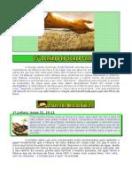 15º Dom TC Ano A - A semente é a Palavra - 13Jul2014.doc