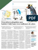 Descubren Pinguino Que Habito Chile Hace Tres Millones de Años