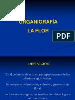 7.- LA FLOR