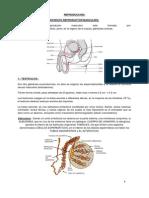 Aparato Reproductor Masculino (1)