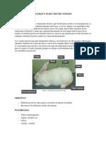 Practica de Rat y Conejos