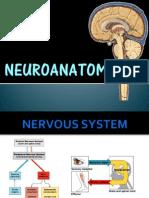 Anatomy of the Brain FINAL