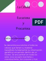 Celula Eucariota y Procariota