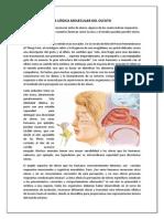 La Lógica Molecular Del Olfato - Lectura en Español