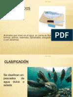 Cortes Del Pescado