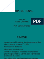 Aparatul Renal