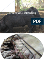 Swine Breeds PDF