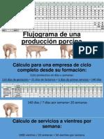 Flujograma de Una Producción Porcina