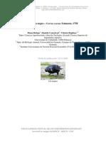 corneja.pdf