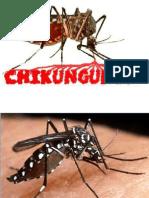 chikunguya