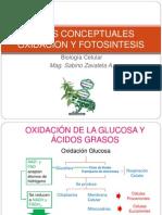 Oxidacion y Fotosintesis (2)