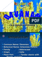 Davanam  Cultivation ppt