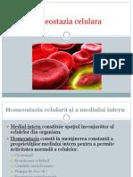 Homeostazia celulara - proiect Biologie