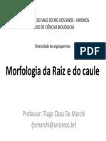 Morfologia - Raiz e Caule