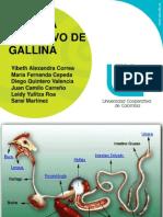 Sistema Digestivo de La Gallina
