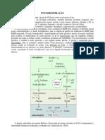 Fisiologia Comparada Das Plantas C3 e C4