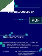 Staphilococcus Sp