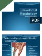 Periodontal Morphology