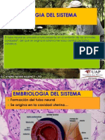 1 Embriologia Del Sistema Nervioso Terminado
