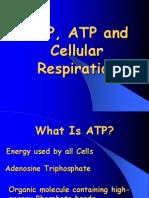 atp and cellular respiration-