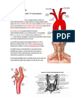 Arteria Cabeza y Cuello