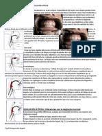 Guía Para La Evaluación de La Deglución Atípica