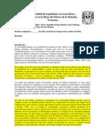 Diversidad de Organismos en Rocas Lisas y Rugosas en La Playa Del Morro de La Mancha