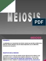 Meiosis 2014