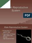 Human Reproductive