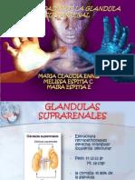 Enfermedades de Glan Suprarenal