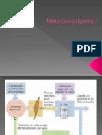 Neuro Anatomía