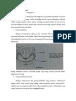 Tata-Infeksi Facial Spaces-kgk 6