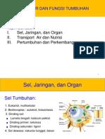Kuliah-10_Struktur-Fungsi Tumbuhan.pdf