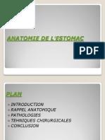 anatomie chirurgicale de l'estomac