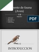 aumento_fauna