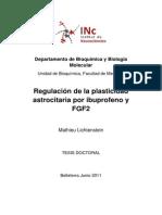 REGULACION DE LA PLASTICIDAD ASTROCITARIA