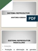 Aula 10 - Sistema Reprodutor