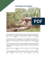 Tala indiscriminada de árboles.docx