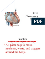 41 Circulatory System