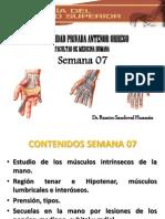 Anatomia Semana 07