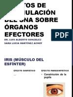 Efectos de Estimulación Del SNA Sobre Órganos Efectores (1)